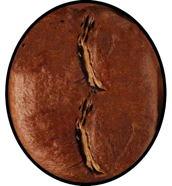 treasure valley coffee bean favicon